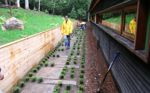setting out plantings